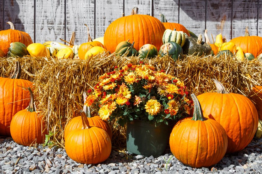 Fall means fun traditions for students