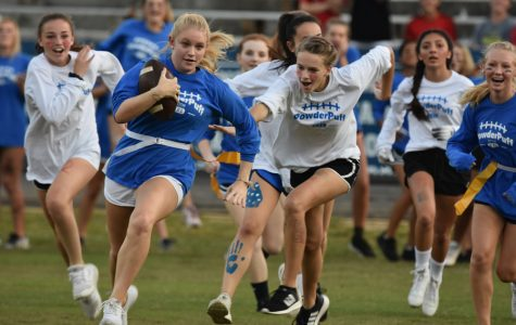 Powderpuff gallery